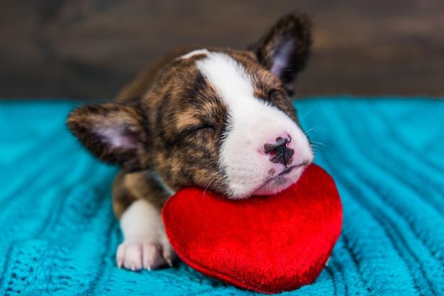 Grappige rode basenji puppy hond slaapt met rood hart, wenskaart