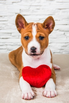 Grappige rode basenji puppy hondje met rood hart.
