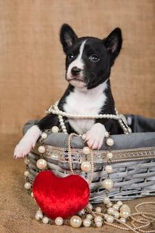 Grappige rode basenji puppy hondje zit in een houten mand met rood hart, wenskaart valentijnsdag
