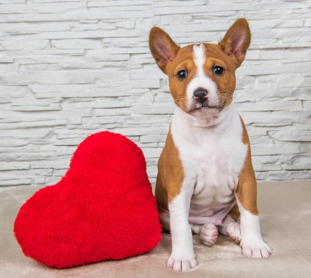 Grappige rode basenji-puppyhond met rood groot hart