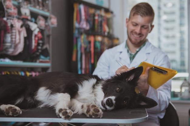 Grappige schattige hond liggend op onderzoek tafel bij veterinaire kliniek