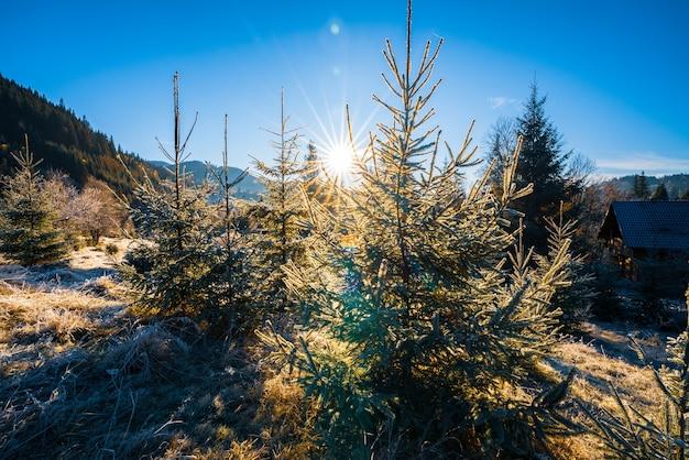 Grappige schattige kerstboom bestrooid met pluizige witte sneeuw op een zonnige heldere weide in de ongewone bergen van de karpaten
