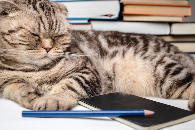 Grappige scottish fold-kat die huiswerk maakte, ze was moe en viel in slaap tussen de studieboeken