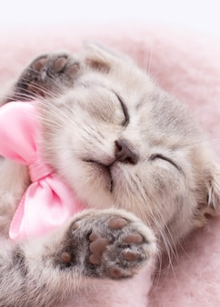 Grappige slapende babykat kitten in rieten mand