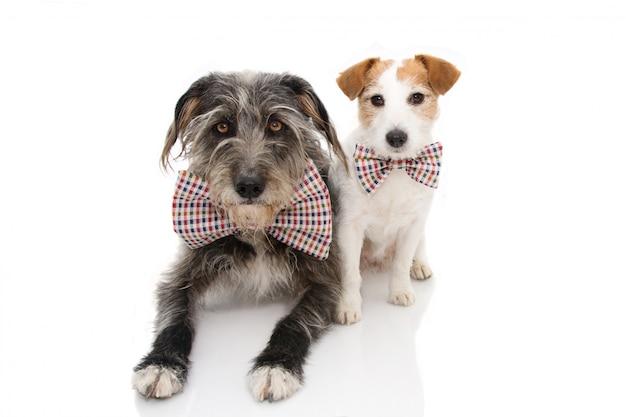 Grappige twee honden die een verjaardag of nieuwjaar vieren die uitstekende bowtie draagt.