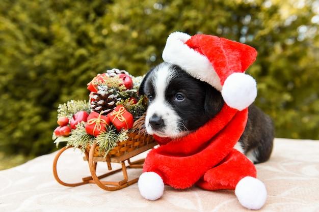 Grappige welsh corgi pembroke in een kerstman kostuum