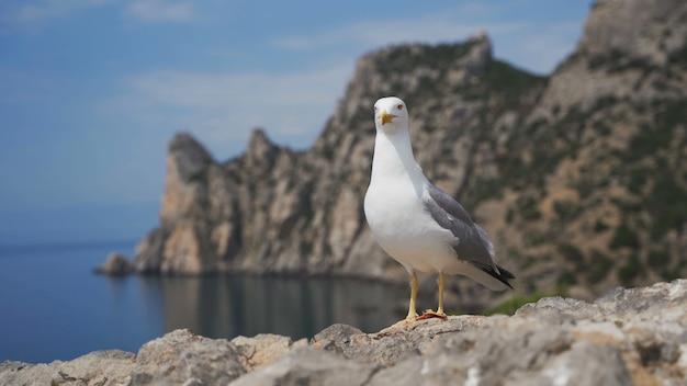 Grappige zeemeeuw staat op een steen tegen de zeekust