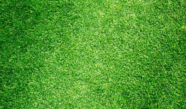 Gras achtergrond golfbanen groen gazon patroon geweven