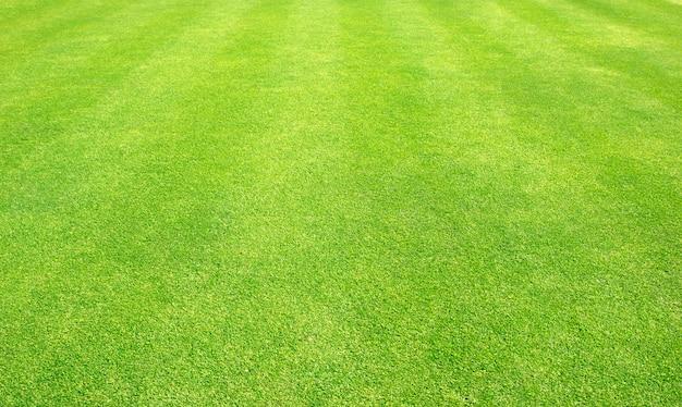 Gras achtergrondgolfbanen groen gazon