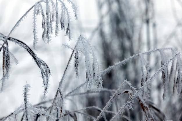 Gras bedekt met vorst en sneeuw in de winter