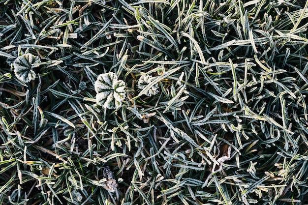 Gras bedekt met vorst getextureerde achtergrond