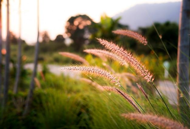 Gras bloeit langs de weg met natuurlijke landschappen en verlichting vóór zonsondergang.