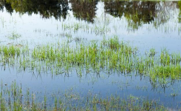 Gras dat in water groeit