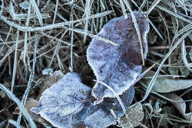 Gras en bladeren waren bevroren met ochtendvorst in het licht van de opkomende zon in de vroege, koude ochtend.
