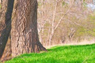 Gras en bomen