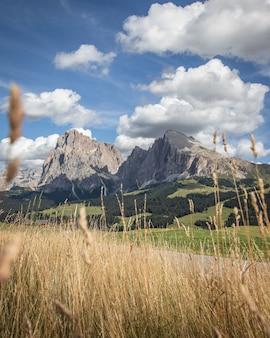 Gras en de berg plattkofel in compatsch italië