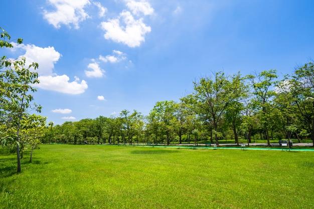 Gras en groene bomen in prachtig park onder de blauwe hemel