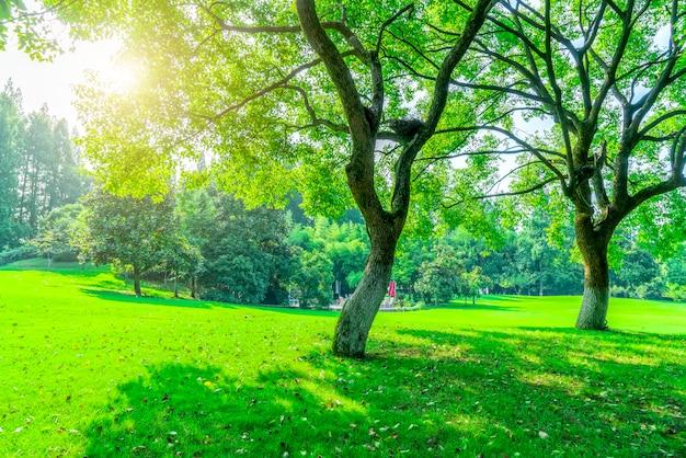 Gras en groene bossen in het park
