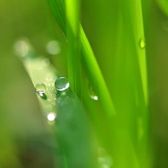 Gras met waterdruppels