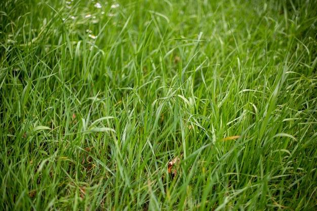 Gras op de grond laten groeien - goed voor behang