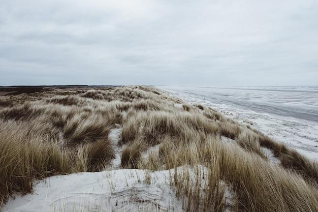 Gras op een strand