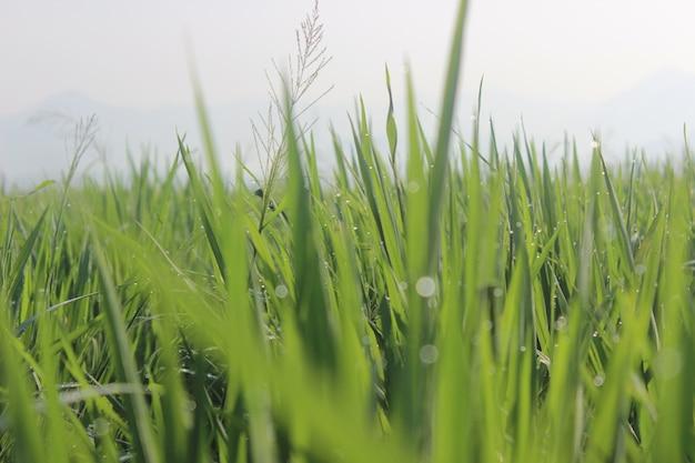 Gras op een veld