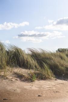 Gras op het strand