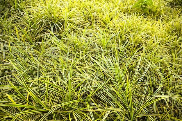 Gras textuur achtergrond