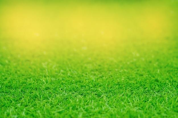 Gras veld achtergrond, groen gras, groene achtergrond