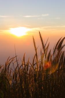 Grasbloem in de herfst met zonlicht