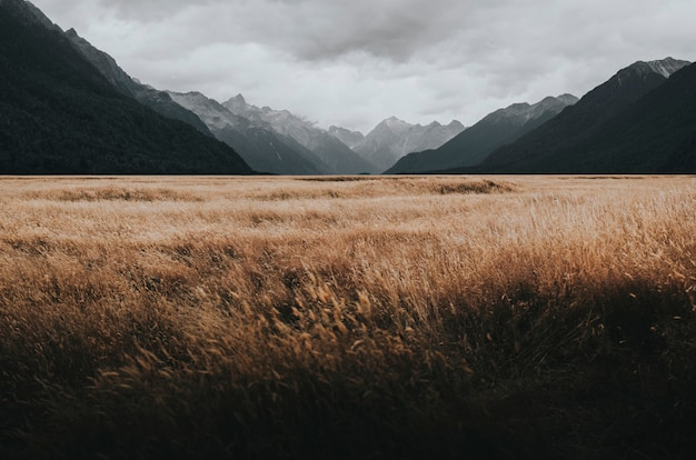 Grasland in milford sound, nieuw-zeeland