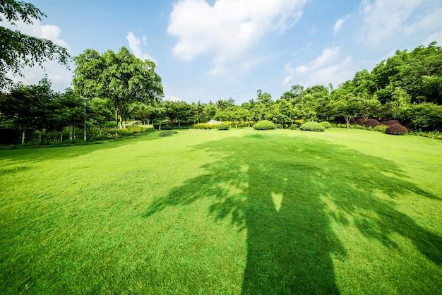 Grasland landschap en greening milieu park achtergrond