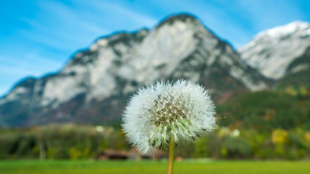 Grass flowers field