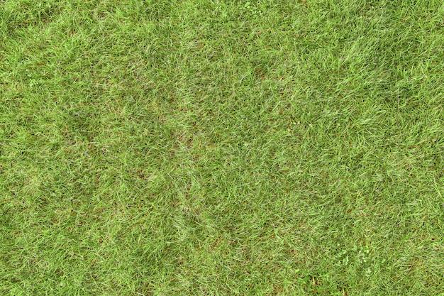 Grastextuur, gazon.