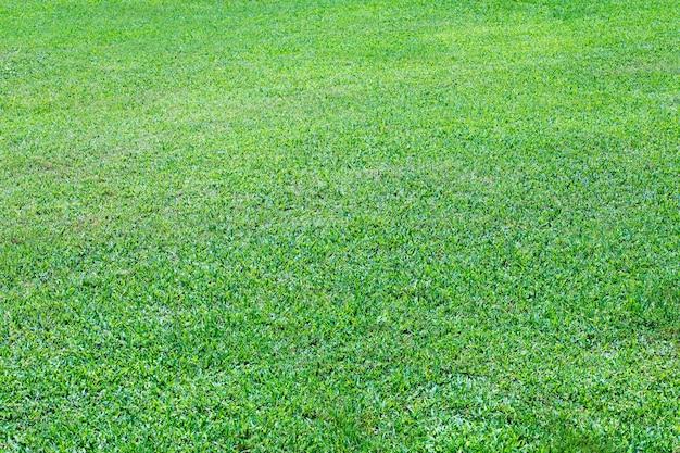 Grastextuur van een veld