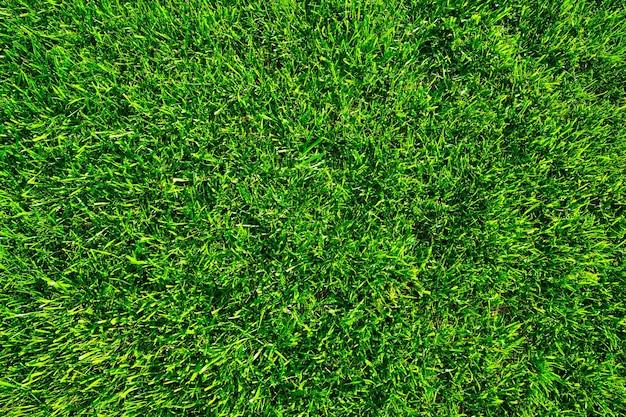 Grasveld achtergrond groen gras groene achtergrond textuur gazon