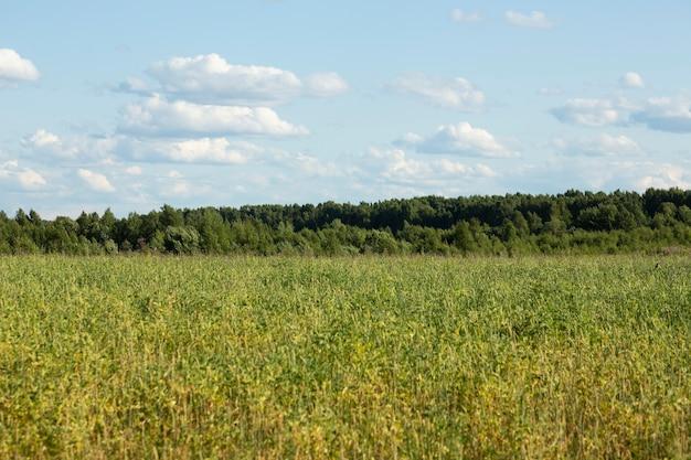 Grasveld en blauwe lucht, groen zomerlandschap op een zonnige dag