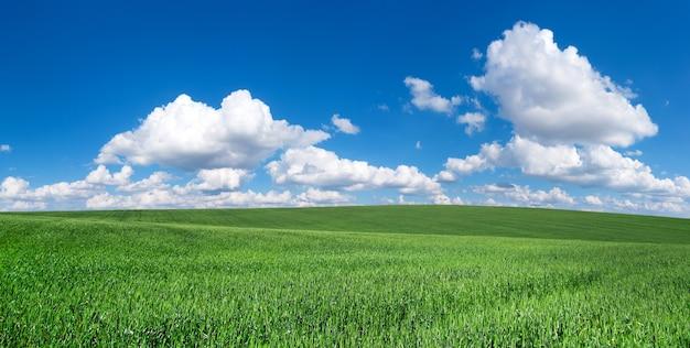 Grasveld en perfecte lucht