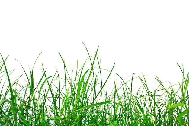 Grasveld met een witte achtergrond