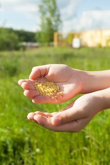 Graszaad in het voorjaar met de hand strooien voor het perfecte gazon.
