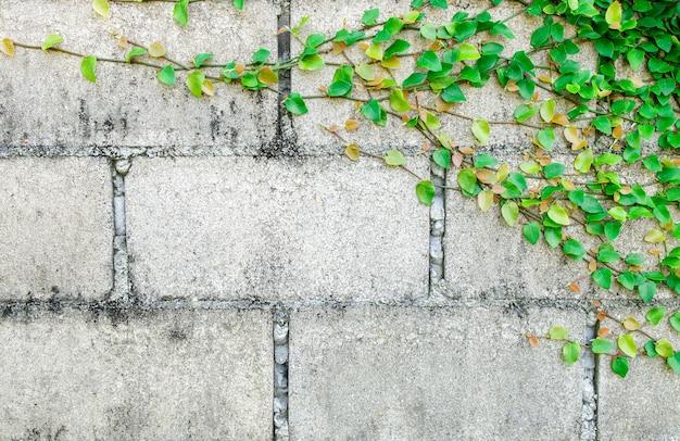 Green creeper plant op witte muur
