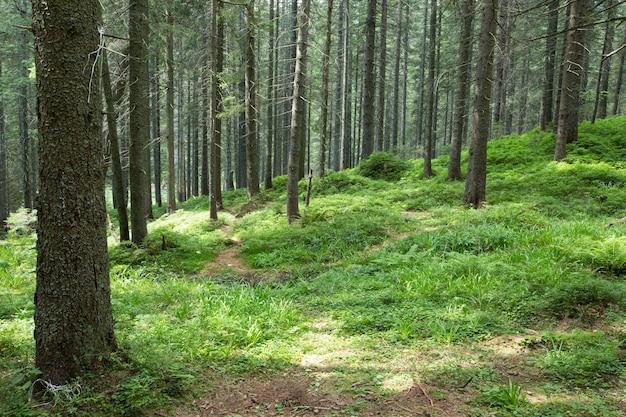 Green forest bomen. natuur groen bos