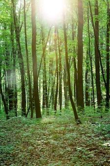 Green forest bomen. natuur groen hout zonlicht achtergrond