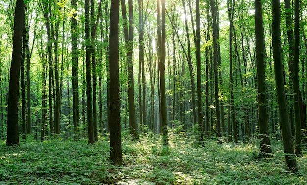 Green forest bomen