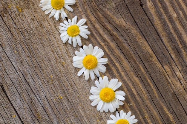 Grens van daisy kamille bloemen op houten tafel