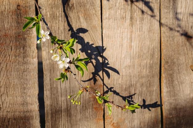 Grens van verse geurige bloemen kers op retro achtergrond. selectieve aandacht. ruimte voor tekst. bloeiende kers met een schaduw op een houten oppervlak