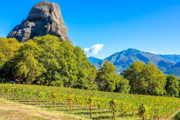 Griekenland. zonnige zomerdag tussen de rotsen van kalambaka. wijngaard behorende bij het rotsklooster van meteora