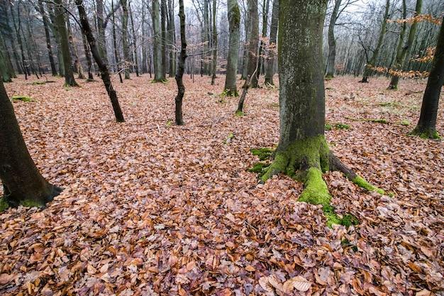 Griezelig bos met een sombere lucht