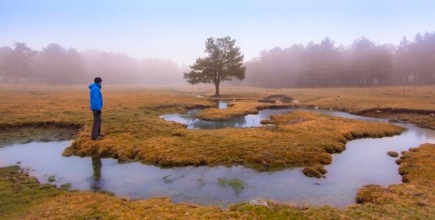 Griezelige scène in het bos met beek, dichte mist en geïsoleerde boom. panoramische fotografie van de natuur in het natuurpark van peguerinos, avila. in castilla y leon, spanje.