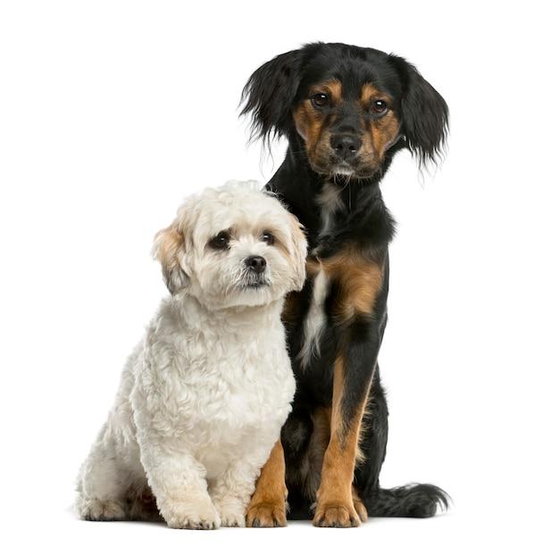 Griffon en shi tzu zitten voor een witte muur